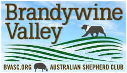 Brandywine Valley Australian Shepherd Club Logo